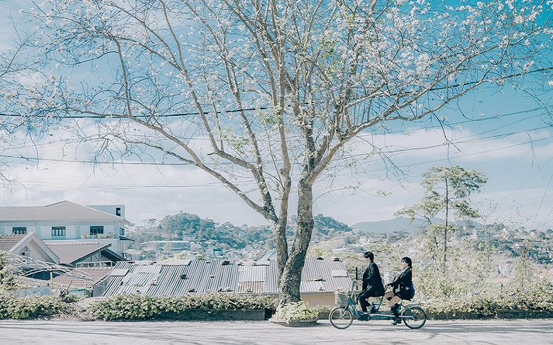 Mùa đông Đà Lạt lãng mạn đến xao lòng - Nguồn ảnh: Internet