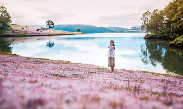 Khung cảnh như trời Tây giữa đồi cỏ hồng, hồ nước xanh ngắt. Ảnh: Internet