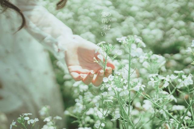 Đoá hoa cải trắng nhỏ xinh, toả hương thơm ngát. Ảnh: Internet