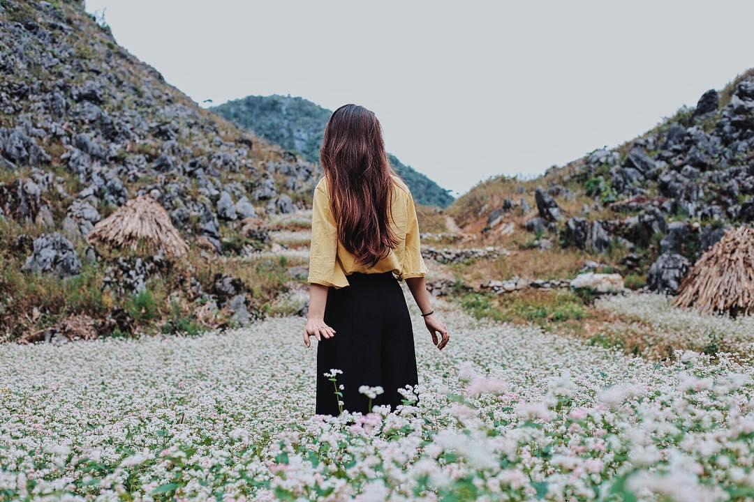Những cánh đồng hoa tam giác mạch trải dài. Hình: Sưu tầm