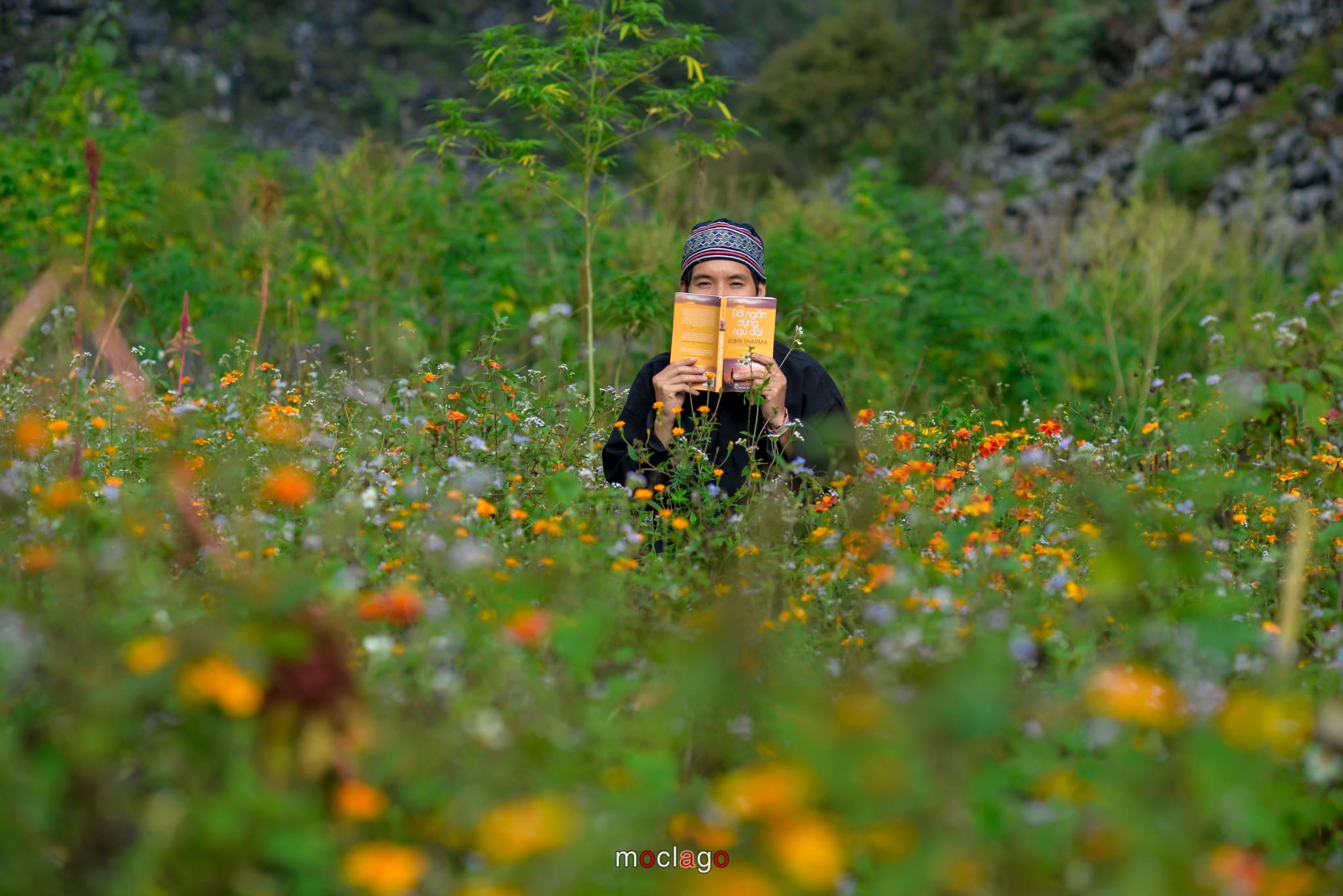 Những vạt hoa cúc họa mi nở sát bên những ruộng hoa tam giác mạch tím hồng. Hình: Moclago