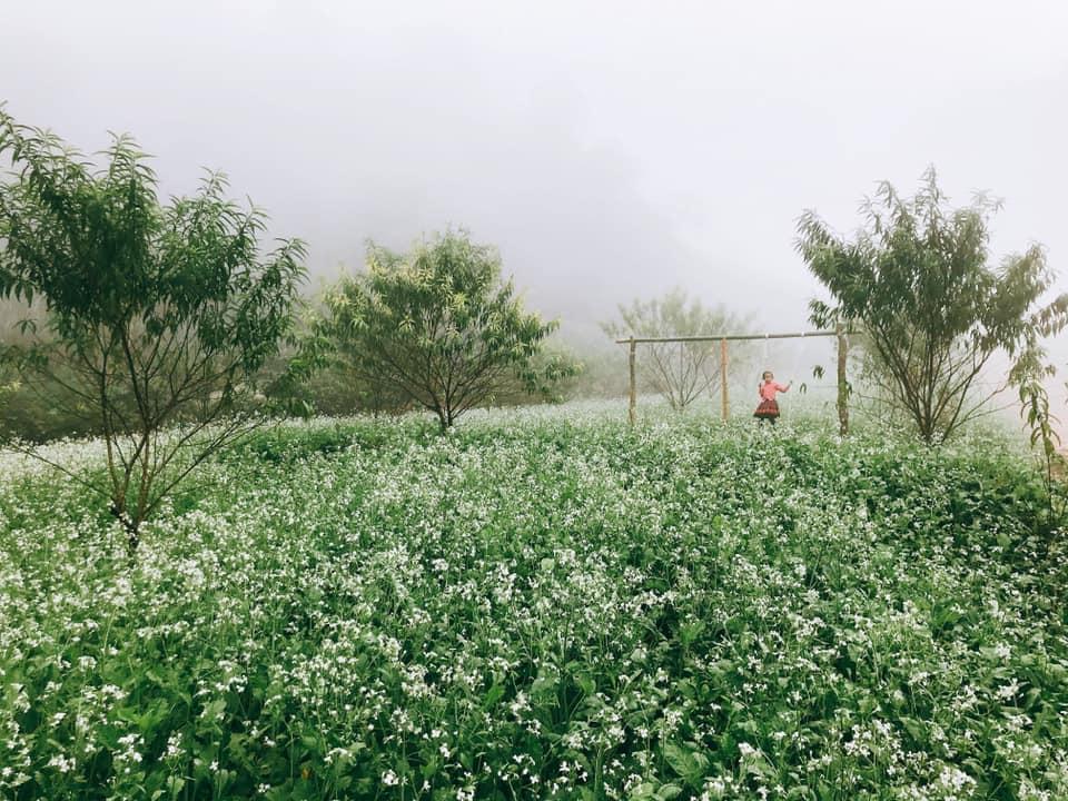 Hoa cải trắng phủ kín Mộc Châu vào mùa đông. Hình: Hoàng Tuấn Anh
