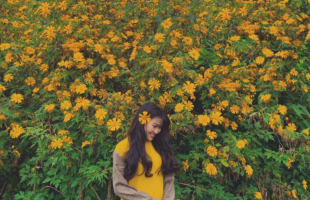 Hoa dã quỳ Mộc Châu mùa đông. Hình: @jane_s_giang