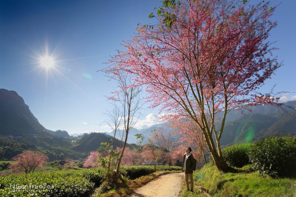 Khung cảnh vô cùng lãng mạn tại đồi chè Ô Long. Hình: Hoàng Trọng Tuấn