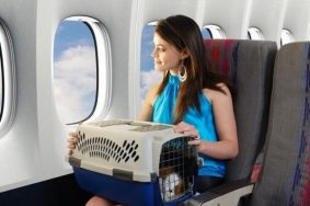 Thủ tục cho thú cưng (chó, mèo) đi máy bay nội địa