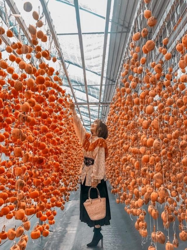 Vườn hồng treo tại Đà Lạt. Ảnh: Internet