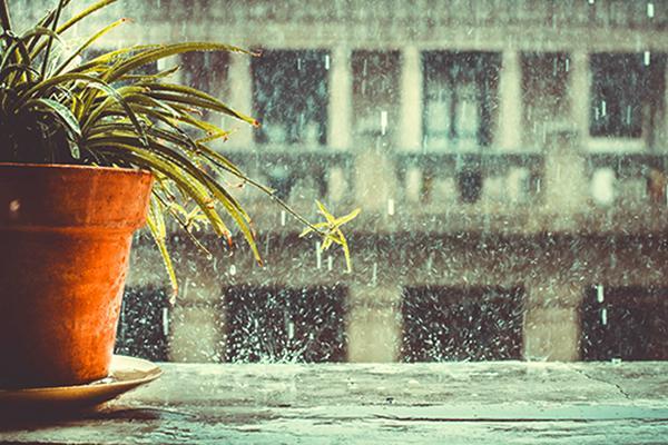 Khung cảnh Sài Gòn đầy lãng mạn hoà cùng màn mưa - Nguồn ảnh: Internet