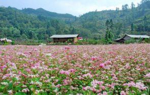 Những loài hoa nở vào mùa đông đẹp say đắm lòng người