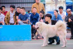 Chú chó đẹp nhất Việt Nam năm 2020