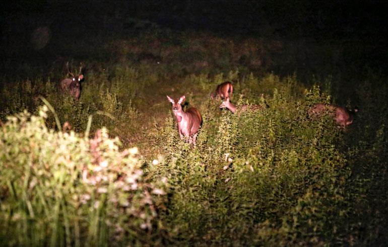 Ngắm thú hoang dã ở Vườn Quốc gia Cát Tiên