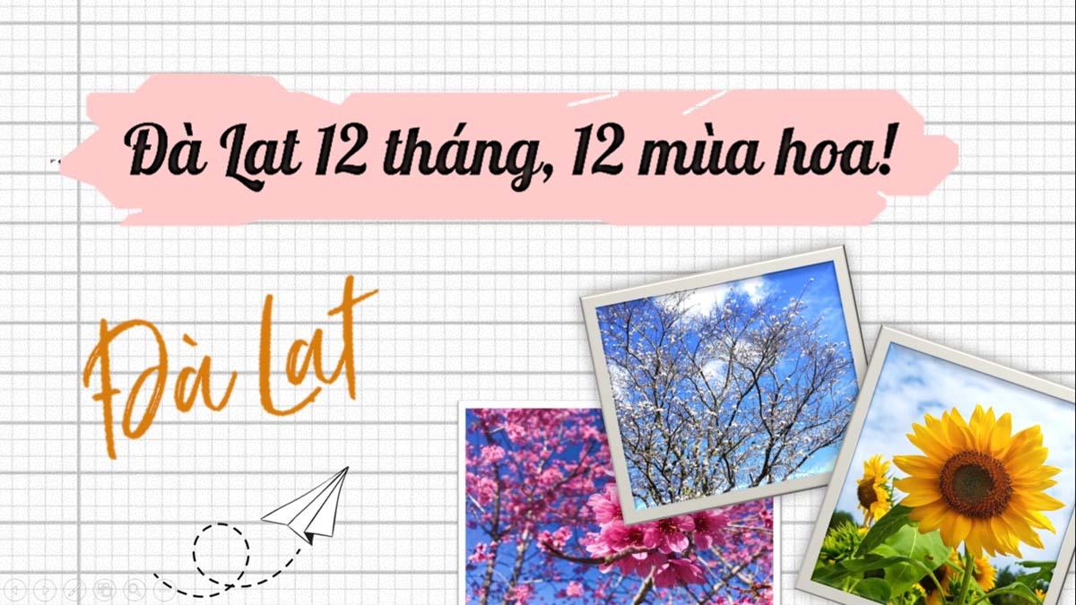 Đà Lạt 12 tháng 12 mùa Hoa