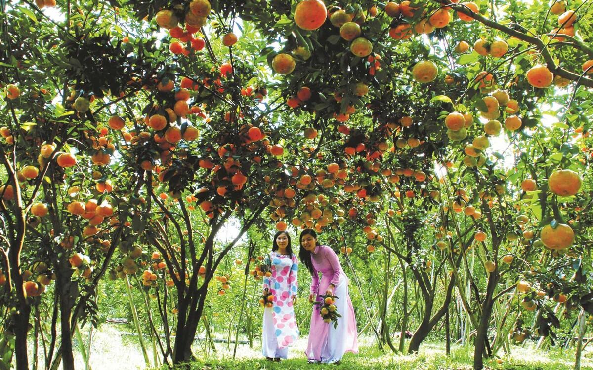 Thăm vườn trái cây Lái Thiêu