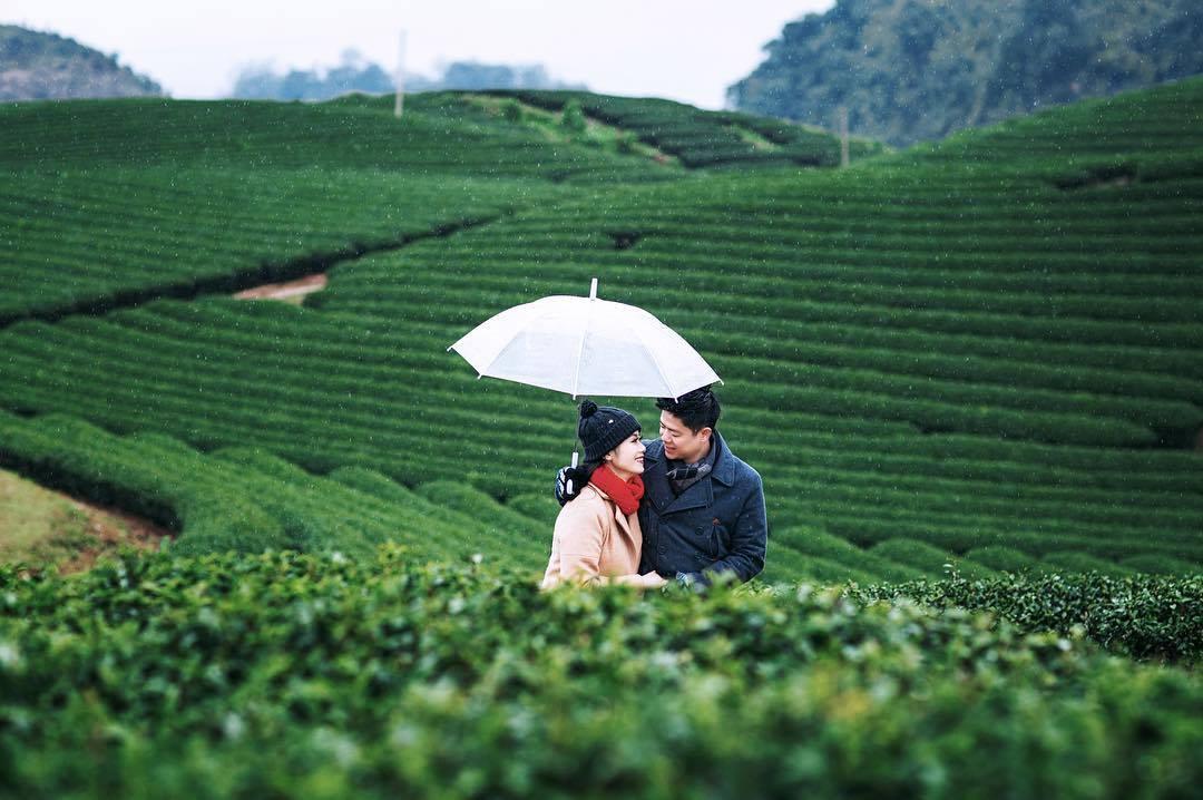 Mộc Châu với những đồi chè xanh ngát. Hình: Sưu tầm