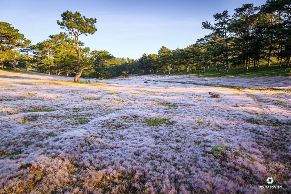 Đồi cỏ Hồng tháng 12 Đà Lạt
