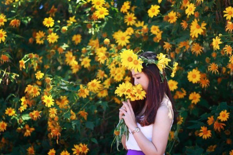 Đà Lạt tháng 10-12: rự rỡ hoa Dã Quỳ