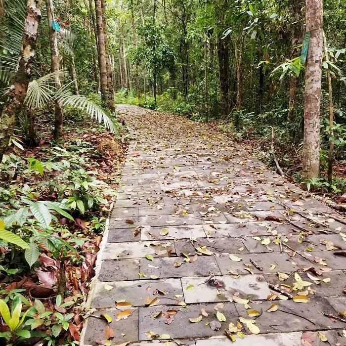 Lối vào rừng Mã Đà với view cực chất - Nguồn ảnh: Internet