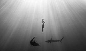 Khách nữ gây tranh cãi vì khỏa thân bơi cùng cá mập
