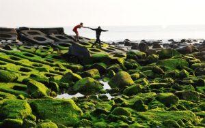Mùa rêu xanh phủ kín bãi đá biển ở Việt Nam