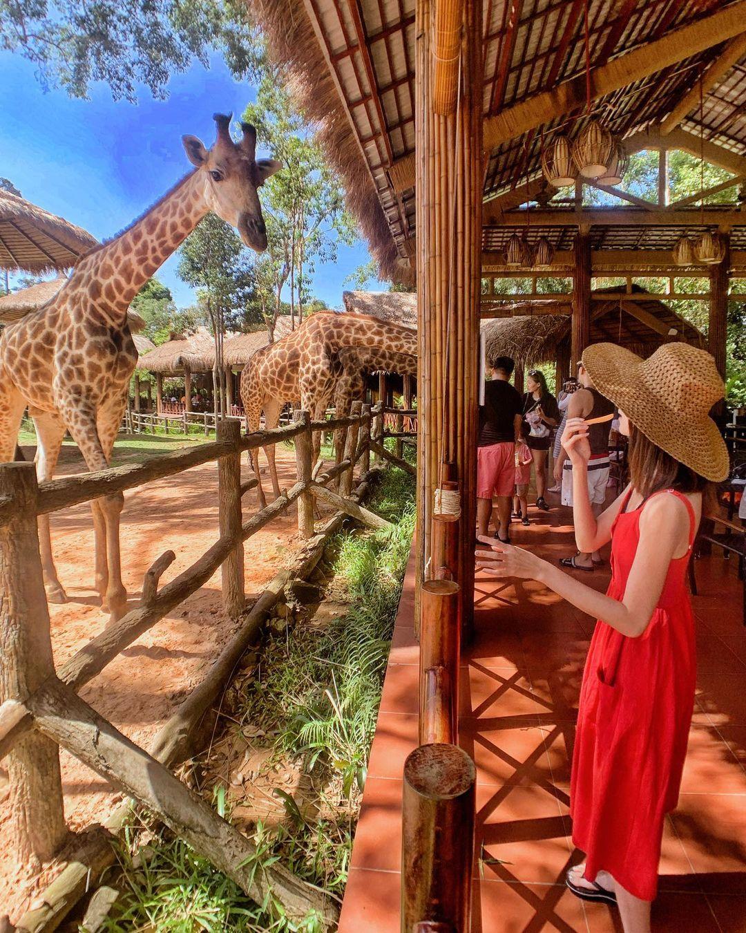 Vui chơi tại Vinpearl Safari. Hình: @wtifwtif