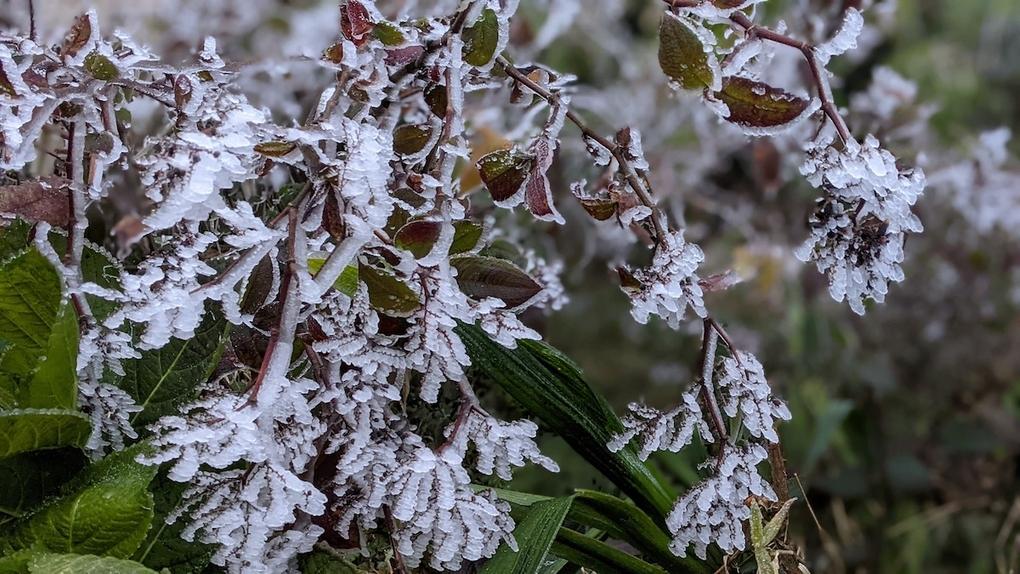 Kinh nghiệm săn tuyết cần nhớ khi đặt chân đến Sa Pa