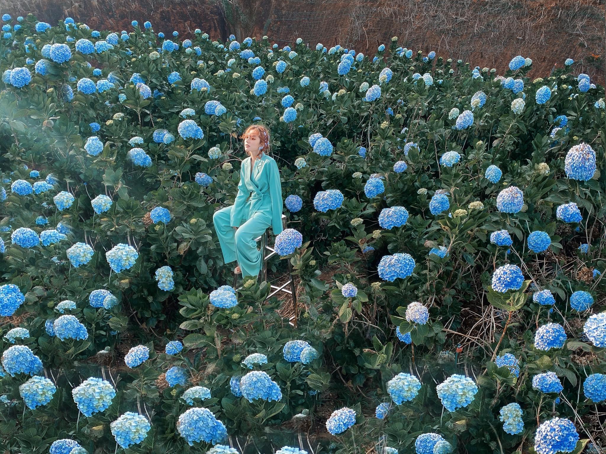 Vườn hoa cẩm tú cầu. Hình: Lâm Nguyễn