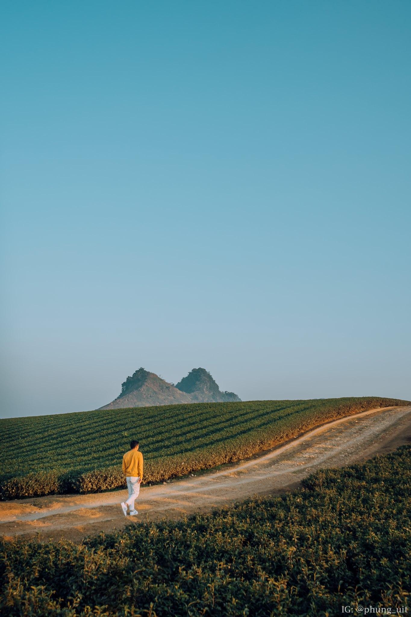 Đồi chè xanh ngát của Mộc Châu. Hình: Minh Phụng