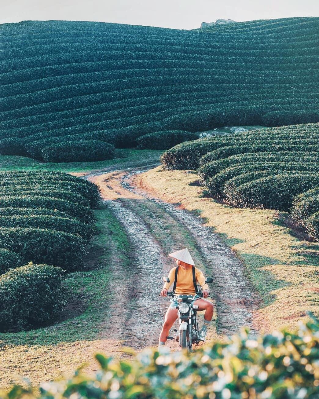 Những đồi chè Mộc Châu xanh ngát. Hình: @soaipham