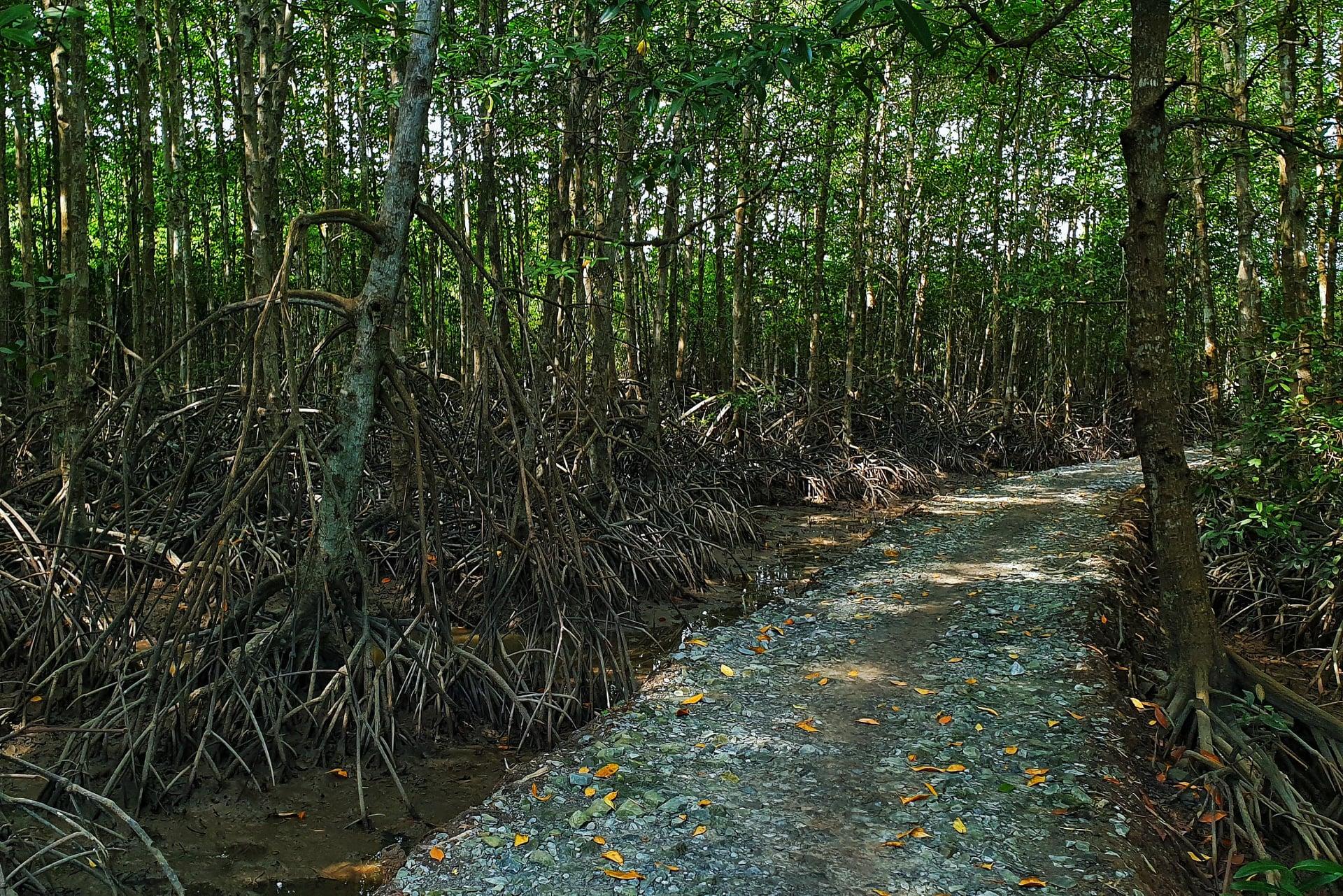 Đi đường Cần Giờ ngắm rừng đước bạt ngàn, cảnh tuyệt đẹp, cực yên bình - Nguồn ảnh: Đạt Lê