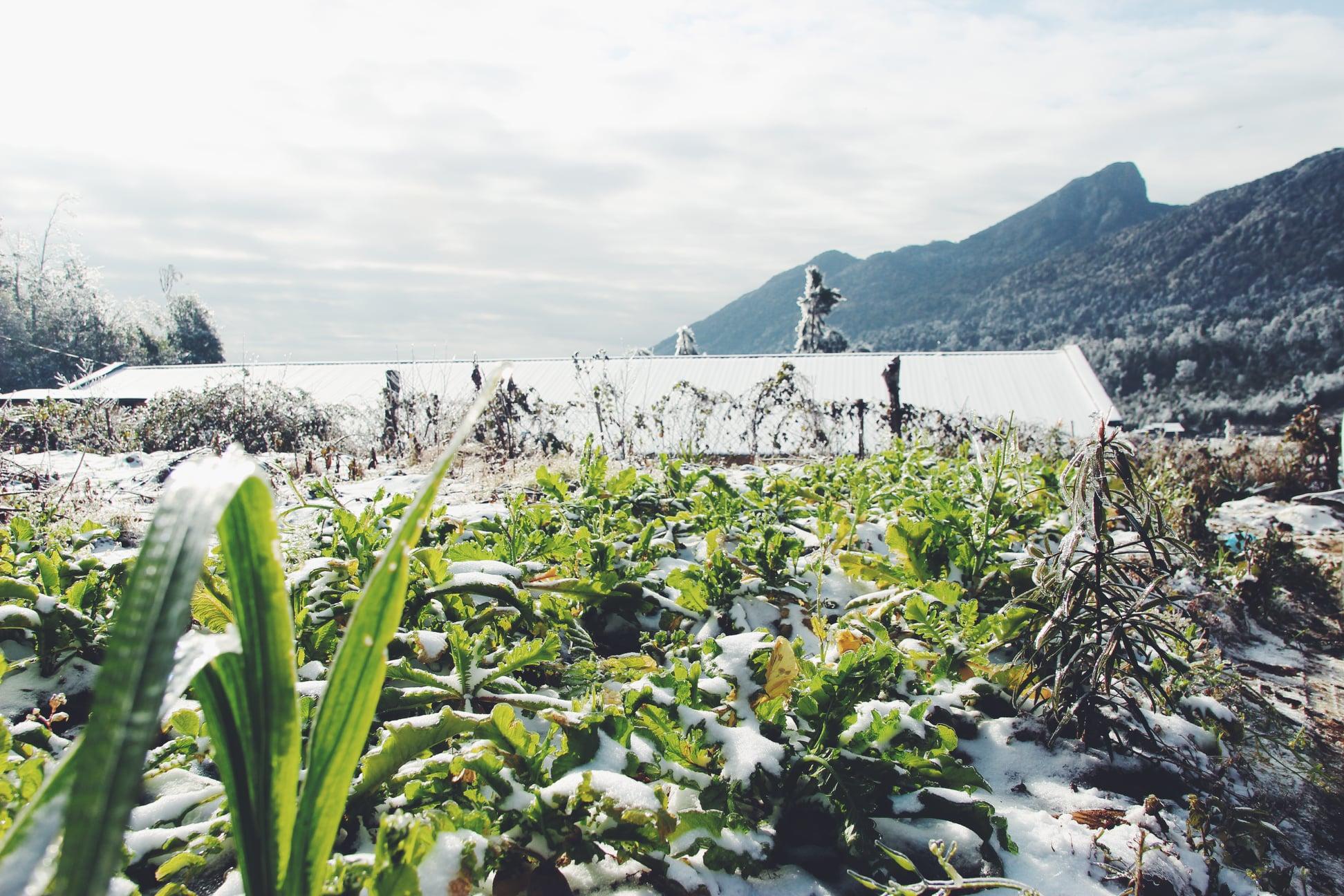 Những lưu ý khi du lịch Sapa ngắm tuyết - Nguồn ảnh: Bùi Hoàng Tùng