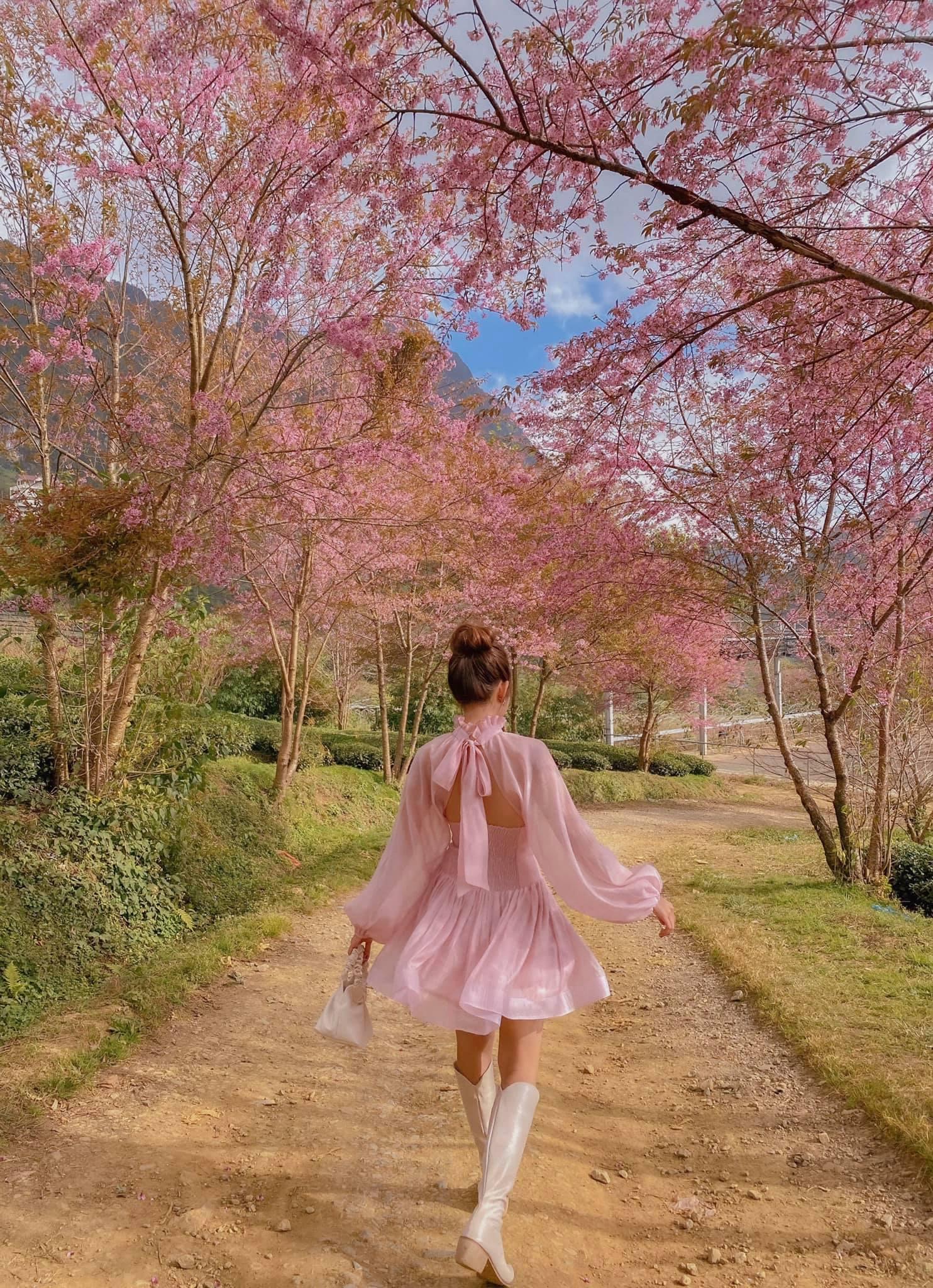 Sapa mùa hoa anh đào. Hình: Phạm Lan Hương