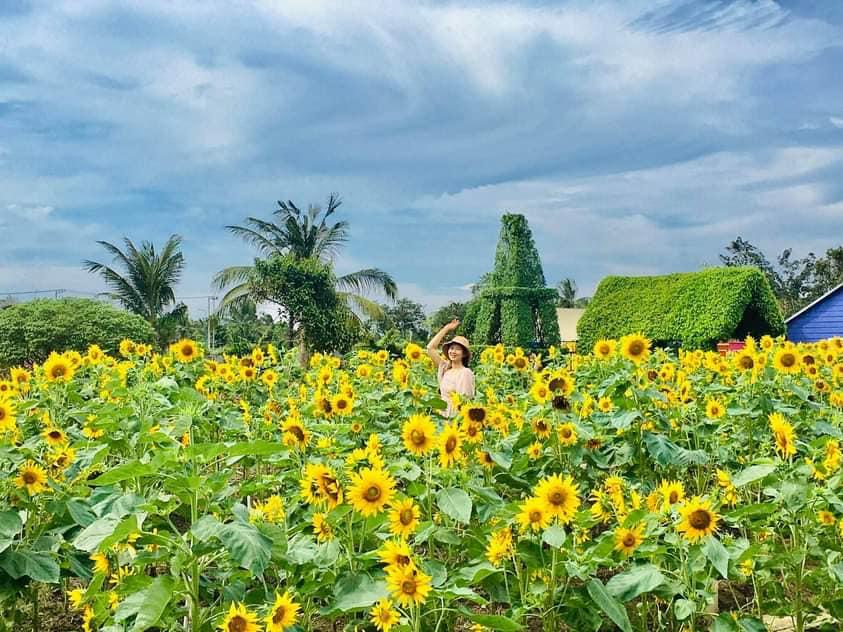 Check-in vườn hoa mặt trời - Nguồn ảnh: Fanpage Cánh Đồng Hoa