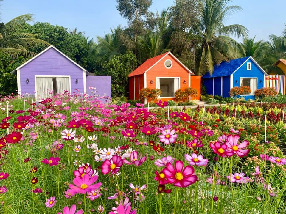 Ngắm vẻ đẹp rực rỡ của các loài hoa xinh yêu tại cánh đồng hoa Hóc Môn: Nguồn ảnh: Fanpage Cánh Đồng Hoa