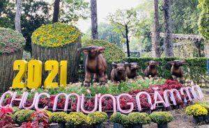 Chợ hoa Tết Tân Sửu mở cửa phục vụ người dân mua sắm tại TP. Hồ Chí Minh