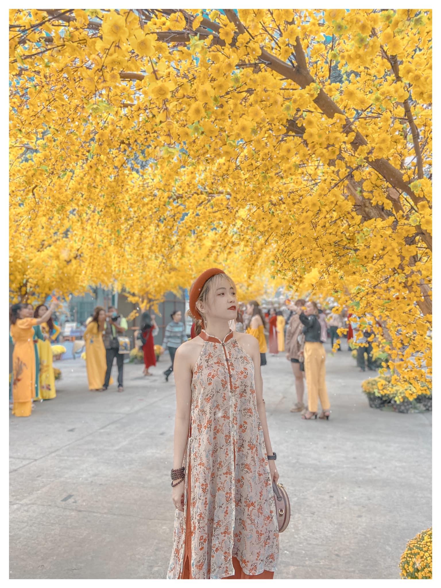 Con đường mai vàng khoe sắc tại phố Ông Đồ - Nguồn ảnh: Phương Quỳnh
