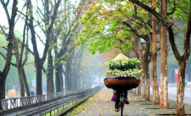Những gánh hoa loa kèn được chở khắp các nẻo phố Hà Nội