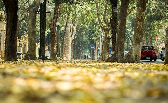 Lá sấu rụng vàng trên đường Phan Đình Phùng
