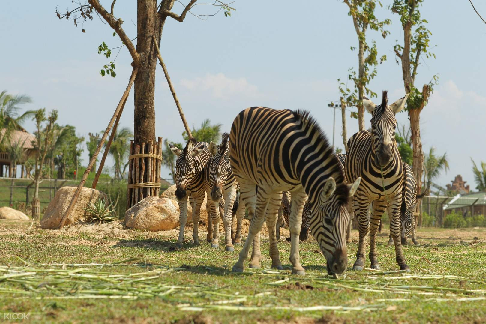 Những loài thú ở đây đều được sống trong hệ sinh thái phù hợp với tập tính sinh học của chúng