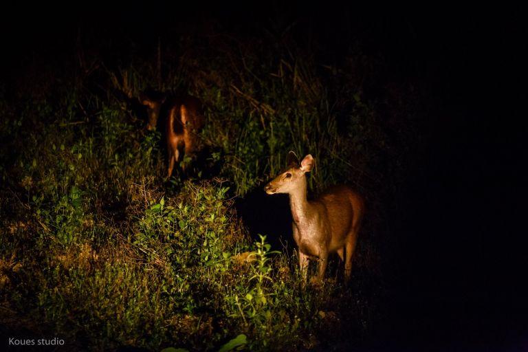 Khám phá thú đêm. Hình: Nguyễn Thịnh