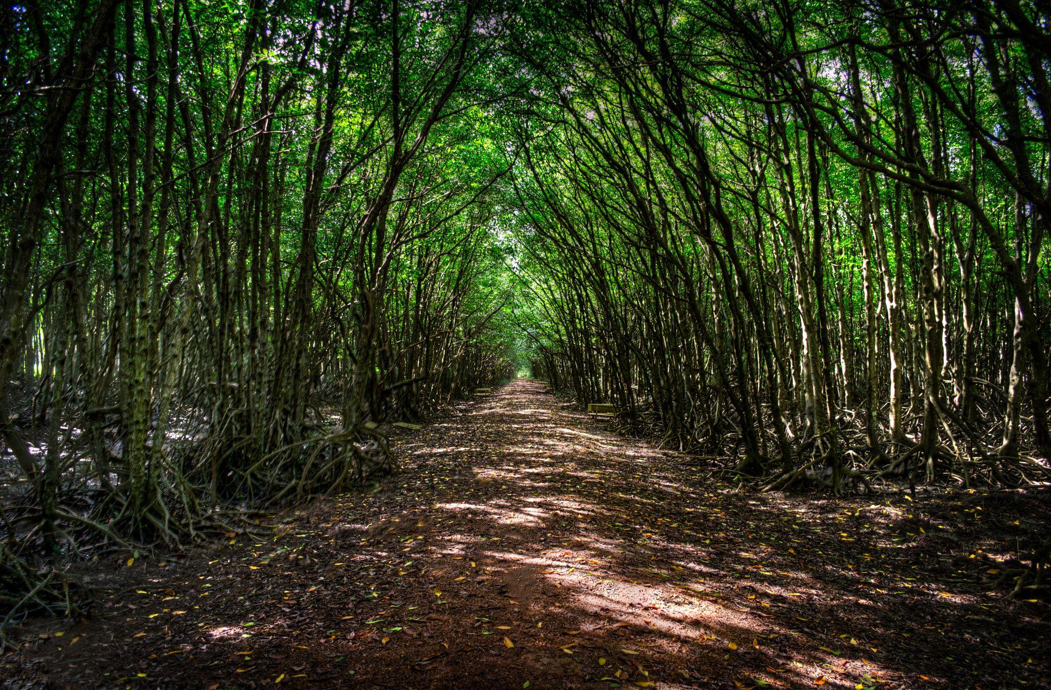 Những con đường ngát xanh. Hình: Sưu tầm