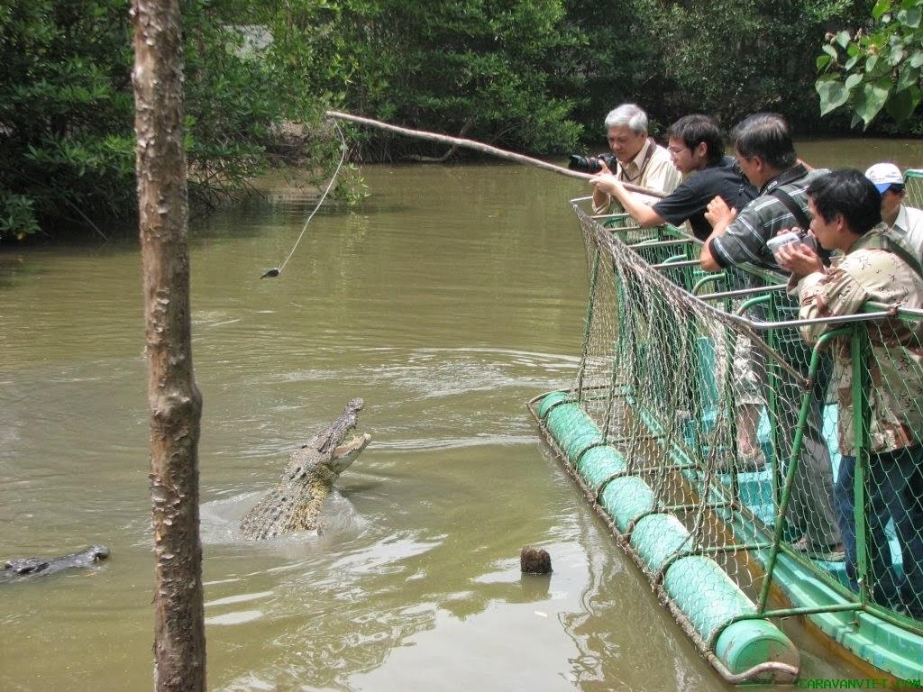 Trải nghiệm cho cá sấu ăn. Hình: Sưu tầm