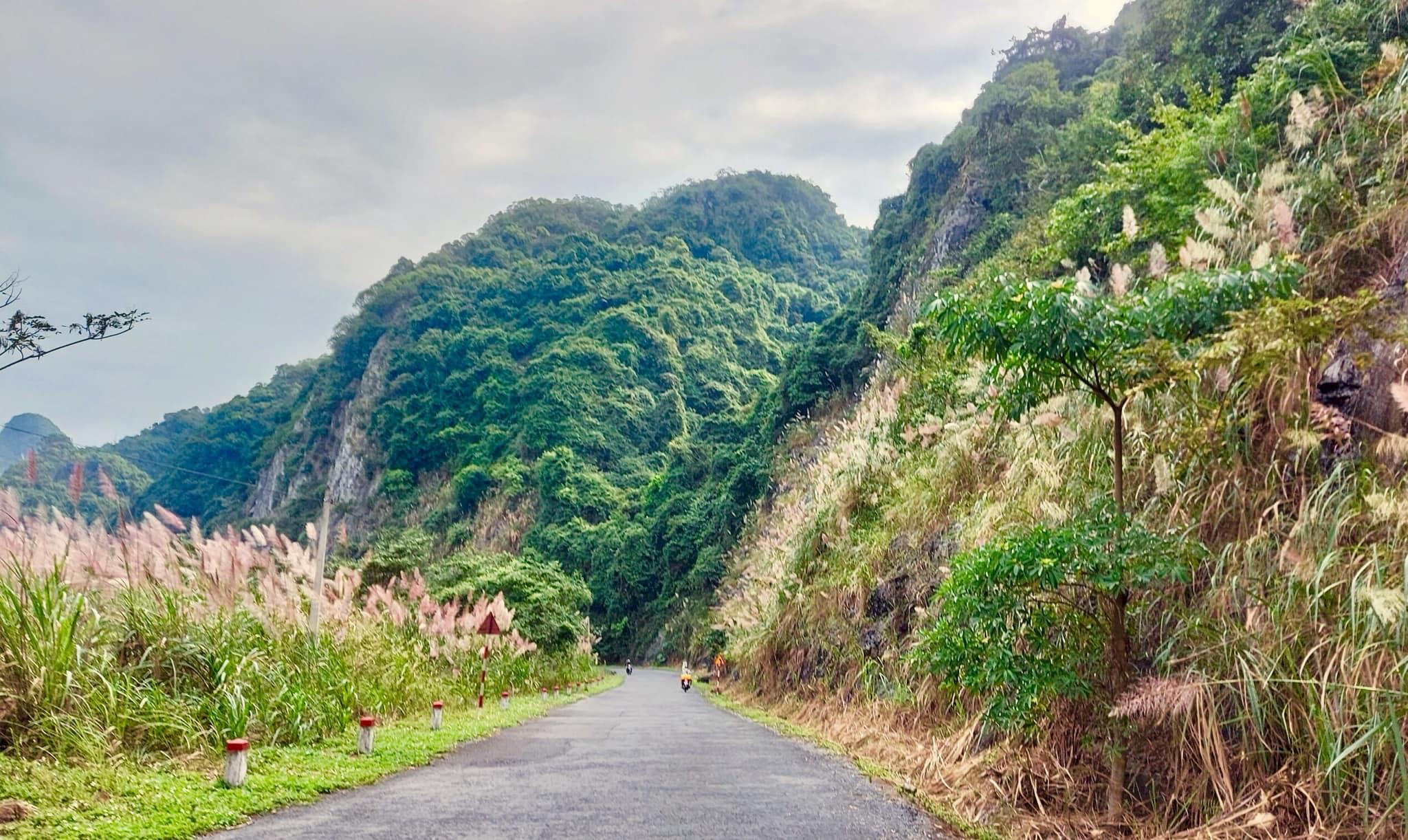 Đường lên vườn quốc gia Cát Bà. Hình: Azid Giau