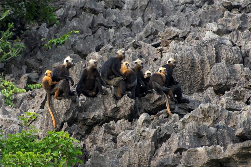 Các loài động vật ở vườn quốc gia Cát Bà. Hình: Sưu tầm
