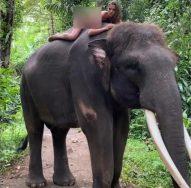 Cô gái hứng chỉ trích vì khỏa thân cưỡi voi