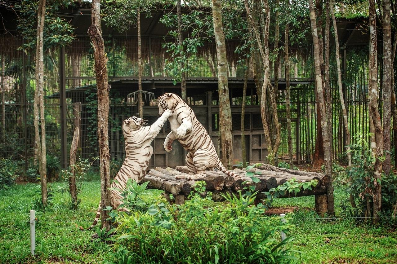 Vinpearl Safari Phú Quốc là vườn thú bán hoang dã đầu tiên của Việt Nam. Hình: Sưu tầm