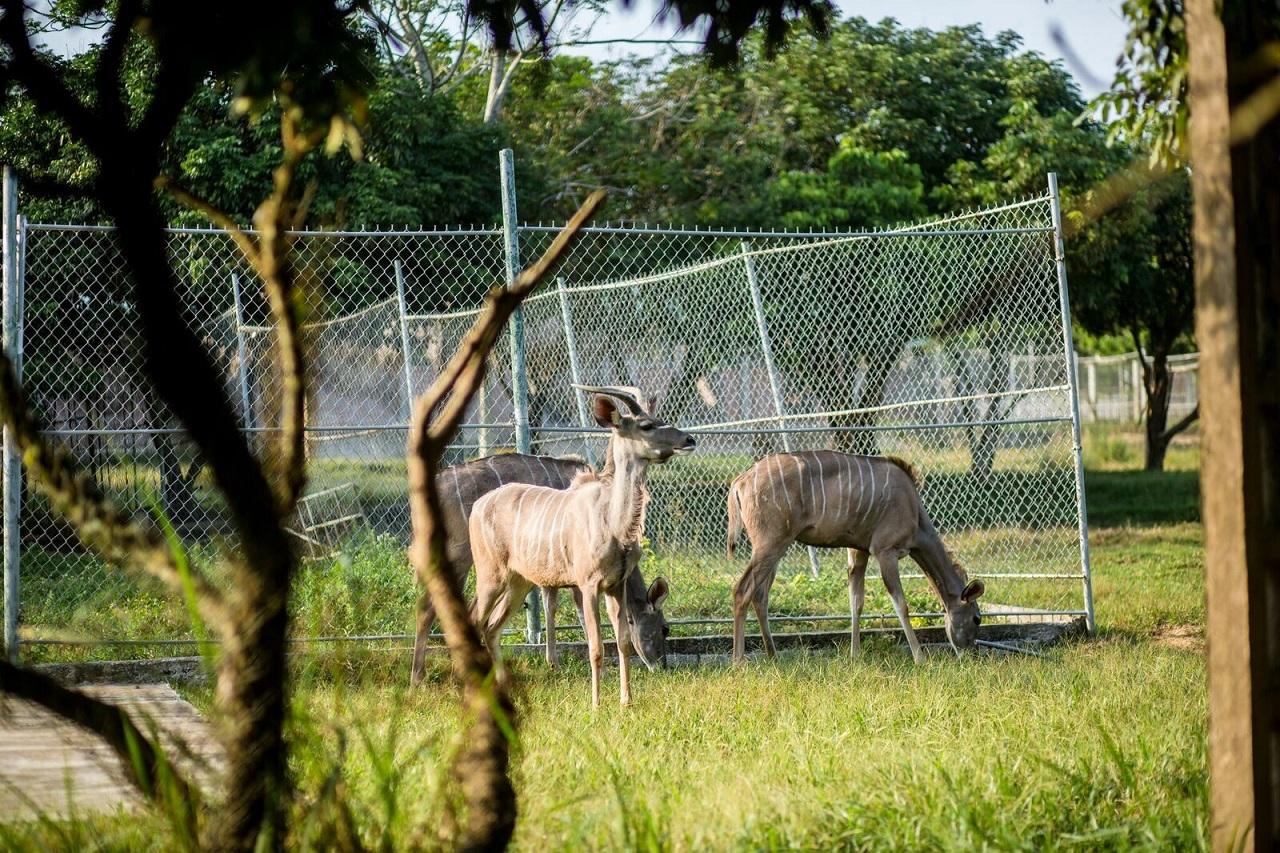 Các loài động vật ở Mường Thanh Safari có môi trường sống rất tốt. Hình: Sưu tầm