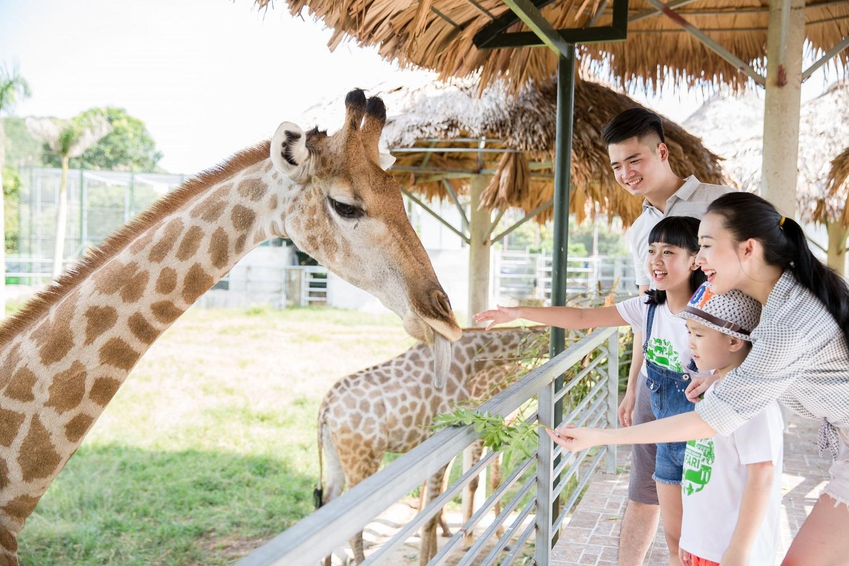 Mường Thanh Safari Nghệ An. Hình: Sưu tầm