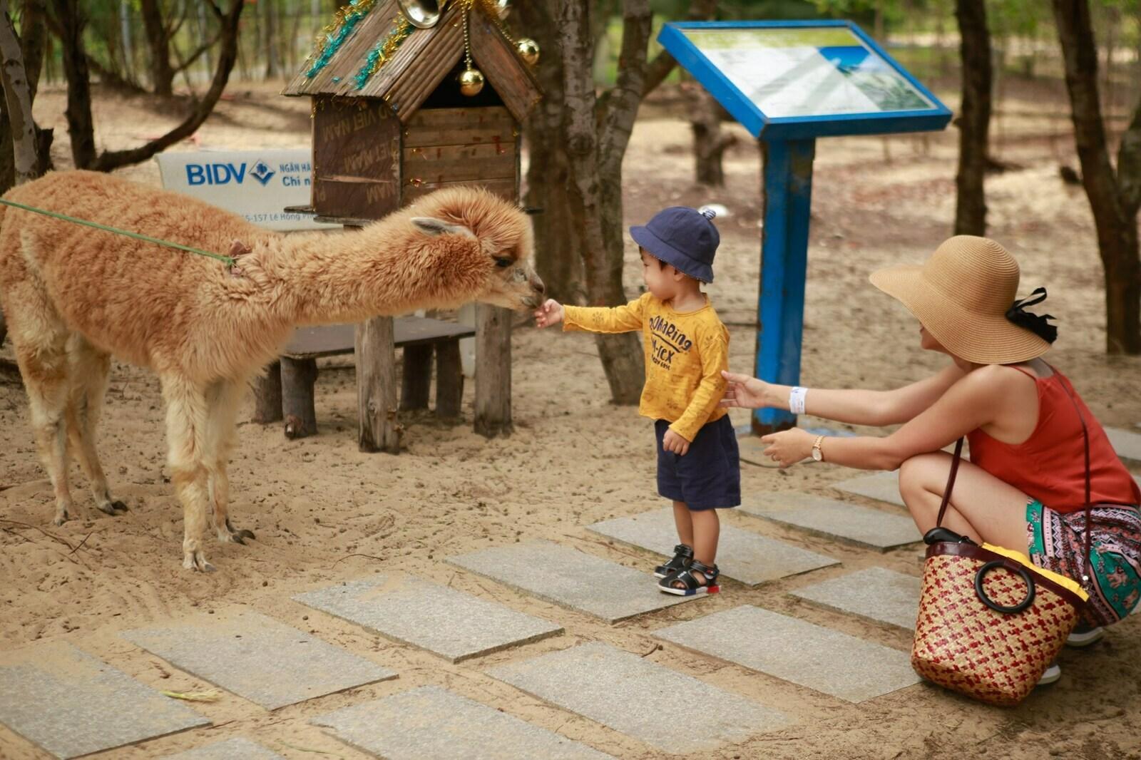 Các loài động vật tại FLC Safari vô cùng thân thiện. Hình: Sưu tầm