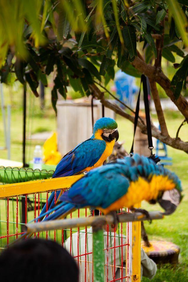 Những chú chim đầy màu sắc. Hình: Sưu tầm