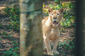 Những vườn thú safari độc đáo nhất ở Việt Nam