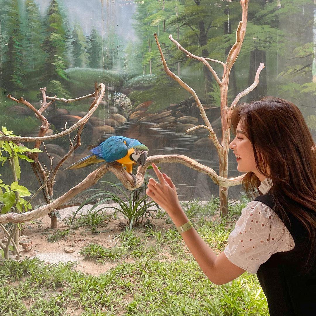 Vô vàn các loài chim khác nhau. Hình: @mintuyenn